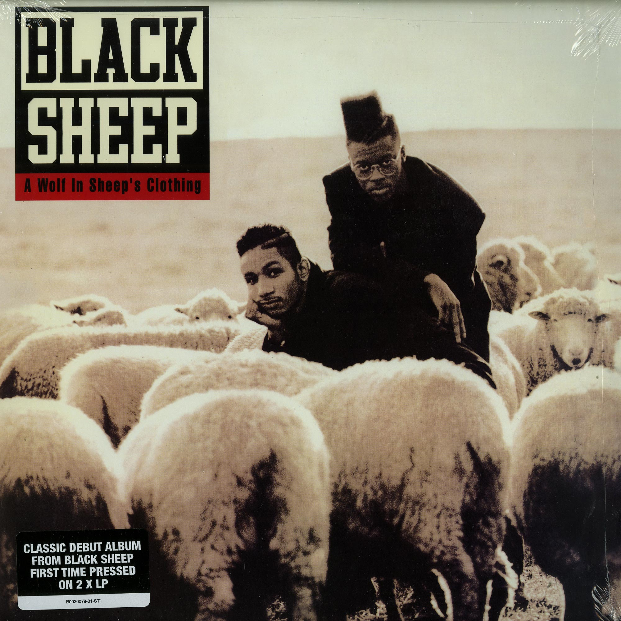 Black Sheep - A WOLF IN SHEEPS CLOTHING